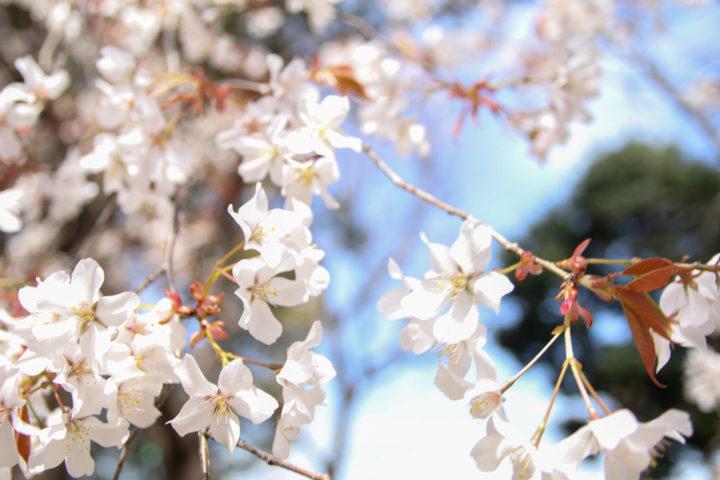 上野公園_20200326_03