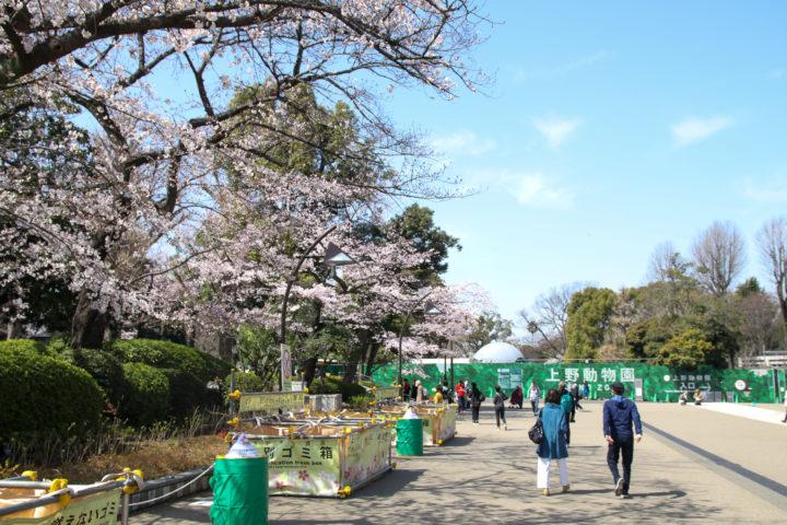 上野動物園_20200326_05