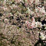 上野の森 公共施設休館のお知らせ