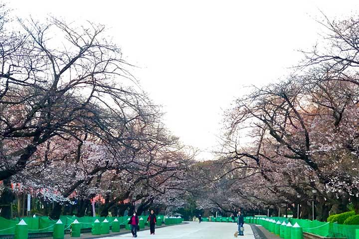 上野公園桜20200321