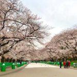 新しく生まれ変わった上野駅公園口と桜最新情報(2020/3/26)