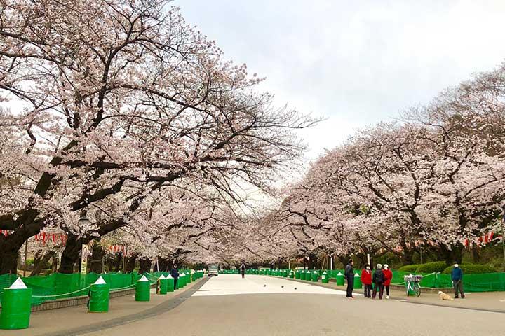 上野公園_2020032_02