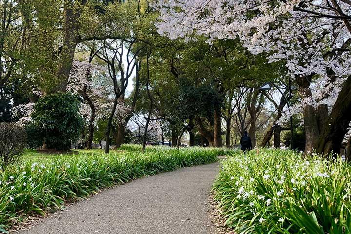上野公園_20200326