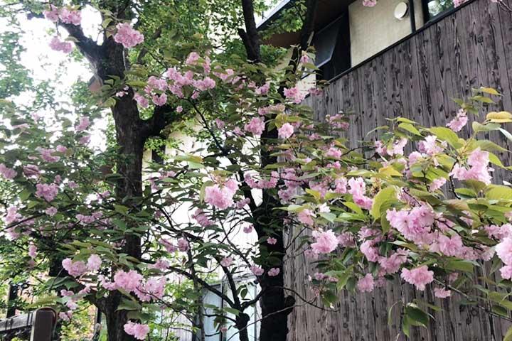 須賀神社4