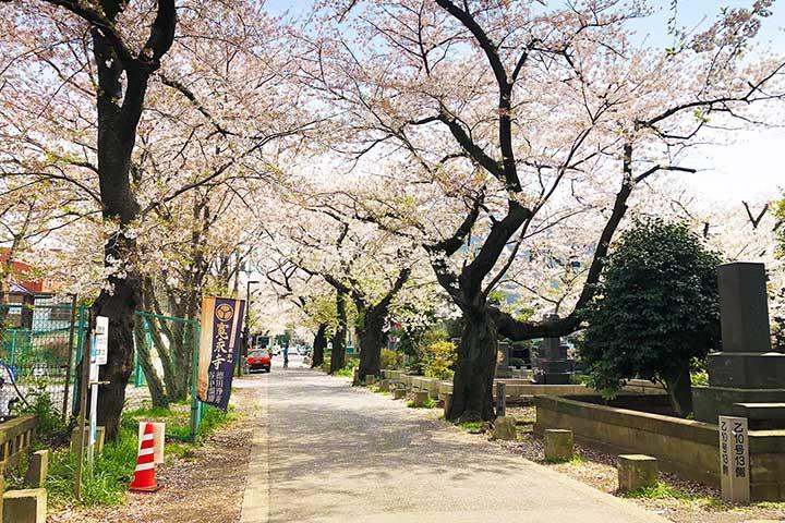 谷中霊園_20200403_2