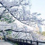 千鳥ヶ淵に続き、桜の名所 江戸城外堀 四谷見附