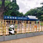 上野動物園 ジャイアントパンダ「シャンシャン」三歳になりました!!